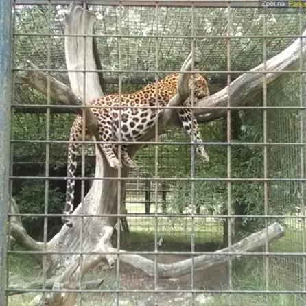 Park exotických zvířat Dvorec